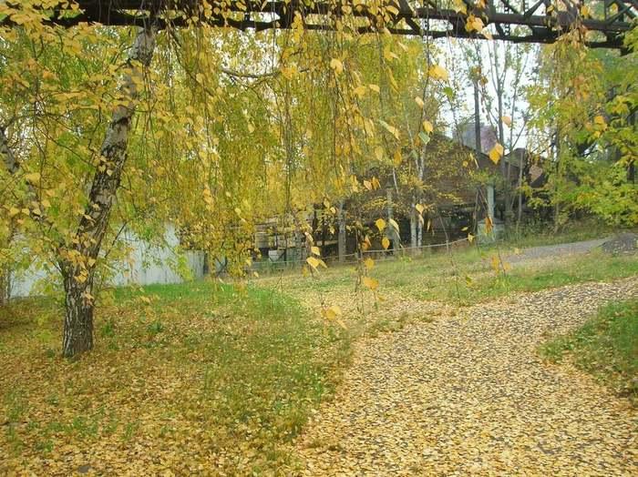 Листья, засыпающие завод